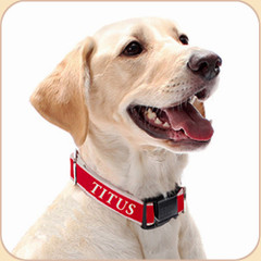Collar may be personalized--item listed separately.