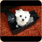 Urban Transport--vavadog Leather Messenger Bag