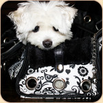 Black & White City Girl Tote
