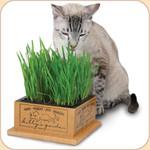 Garden Box for Kitty