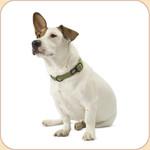 Hemp Collar Small Dog