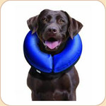 Cloud Collar for Convalescing Pets