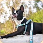 Ribbon Collar, Leash &amp; Step-In Harness Small &amp; Medium