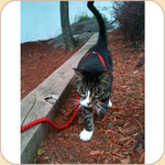 Kitty Harness with Bungee Leash S, M &amp; L