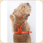 Braided Leather Buckle Harness