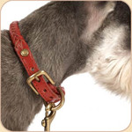 Braided Leather Buckle Collar