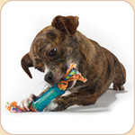 Pup Small Dental Chew