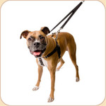 Freedom Training Harness & Leash