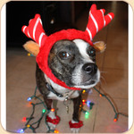 Holiday Reindeer Antler Costume