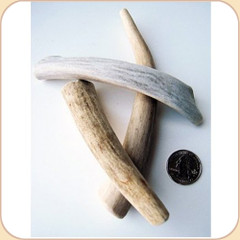 Mini Antler Assortment