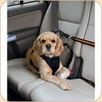 Slip-On Harness with Zip Line & Leash