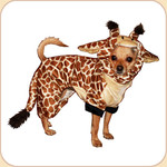 Giraffe Costume SALE 10% OFF