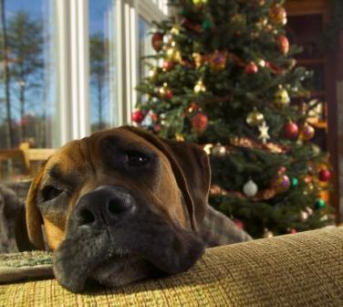 dog-christmas-web.jpg