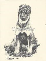 GSD Puppy Sitting Notecard