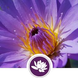enfleurage-flower.jpg