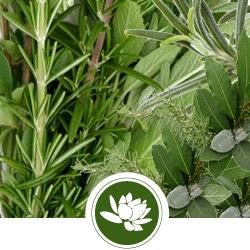 enfleurage-herbs.jpg