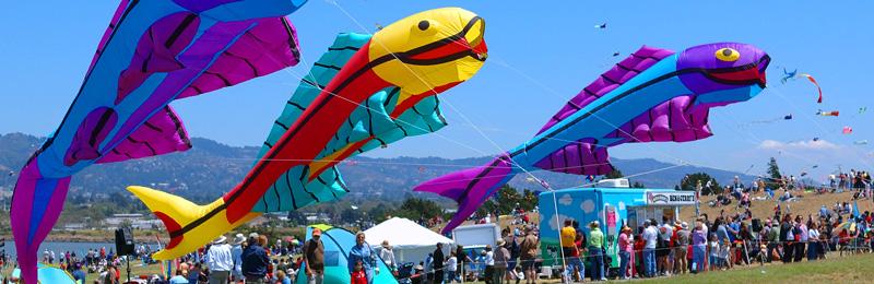 fish-at-bkf.jpg