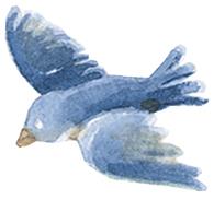 blubird.jpg