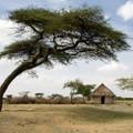Kenyan AA