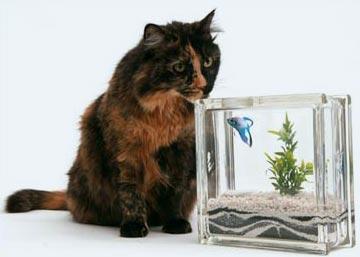 betafish-aquablock.jpg