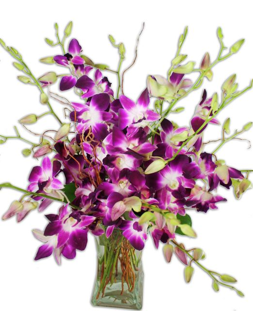 exotic-purple-orchids.jpg