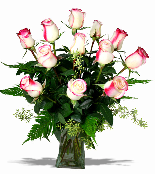 Sweetness roses belvedere flowers of havertown pa a creamy white rose with a lipstick pink edge belvedere flowers carries the best quality roses and can also special order any other color variety you mightylinksfo