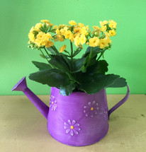 Tin Watering Can with Blooming Plant