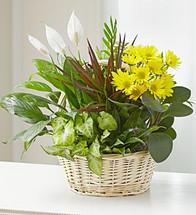 Basket Plant Garden with Fresh Cuts