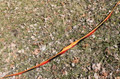 Bamboo Backed Osage Orange Longbow