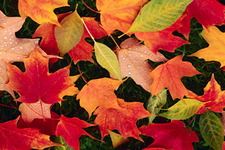 Fall Signs