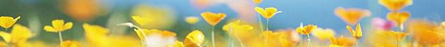 flower-banner.jpg