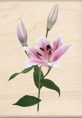 Pink Lily Photo Realistic Collection Inkadinkado Wood Stamp