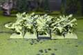 Ogre Kingdoms Gnoblars Lot 8345 Blue Table Painting Store