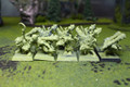 Ogre Kingdoms Gnoblars Lot 8346 Blue Table Painting Store
