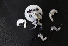 Tyranid Old One Eye Lot 10401 Blue Table Painting Store