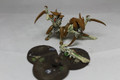 Tyranid Warriors x2 13546