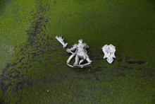 Reaper Fantasy Adventurer Lot 5399 Blue Table Painting Store