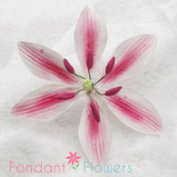 """3.5"""" Stargazer Lily - Large - Dusty Rose (Sold Individually)"""