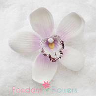 "3.5"" Cymbidium Orchid - Large - Sylvan Candy White w/ Lavender (Sold Individually)"