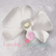 "2.5"" Phalaenopsis Butterfly Orchid - Medium - White (Sold Individually)"