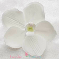 "3"" Vanda Rose Davies Orchid - Large - White (Sold Individually)"