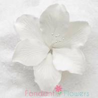 "3.5"" Gladiola - Large - White (Sold Individually)"