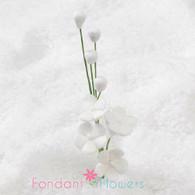 "2.5"" Forget-Me-Not Blossom Filler - White"