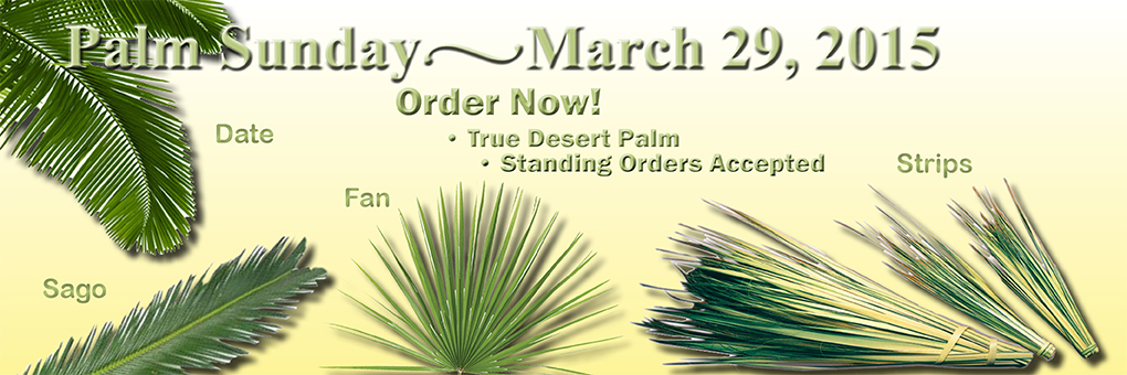 Order Palm for your Church  for Palm Sunday