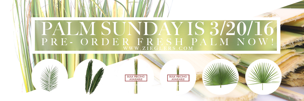 Buy Fresh Palm for Palm Sunday 2016 at the lowest prices
