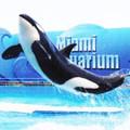 Miami Seaquarium Tour