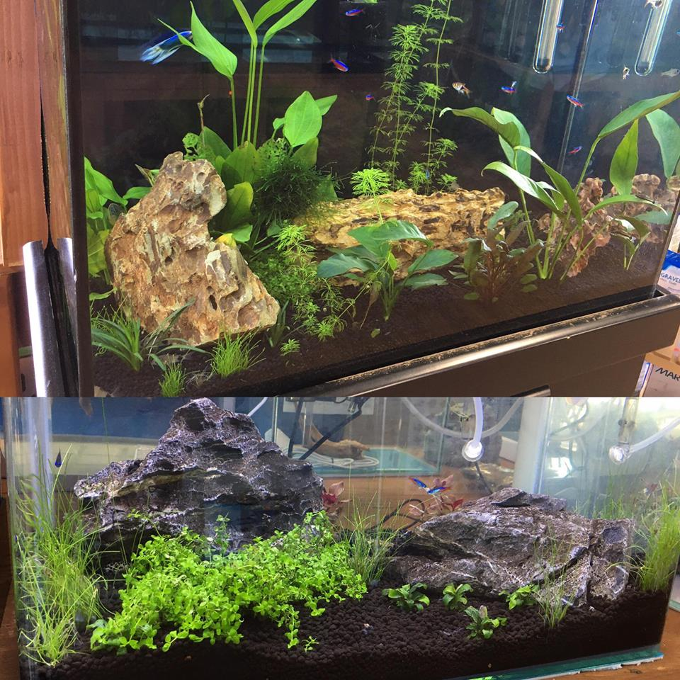 San Diego Aquascaping Event