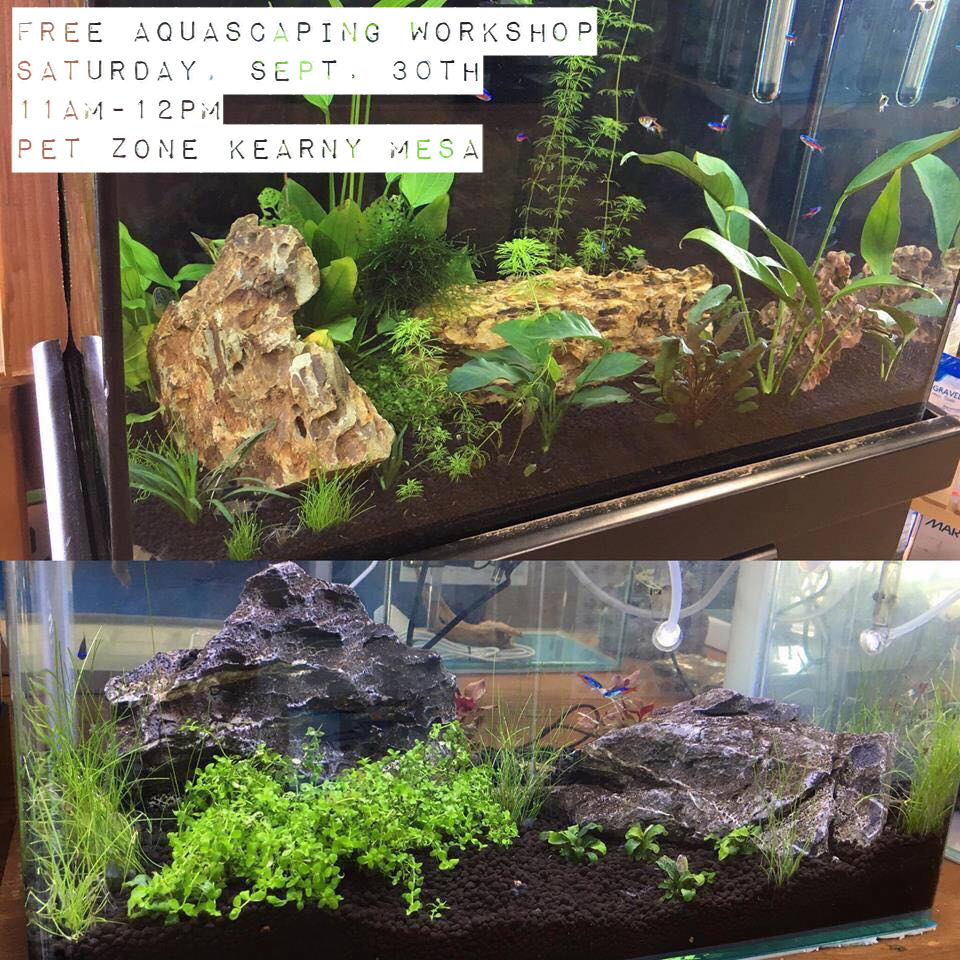 Free Aquascaping Workshop at Pet Zone Tropical Fish in San Diego - Kearny Mesa