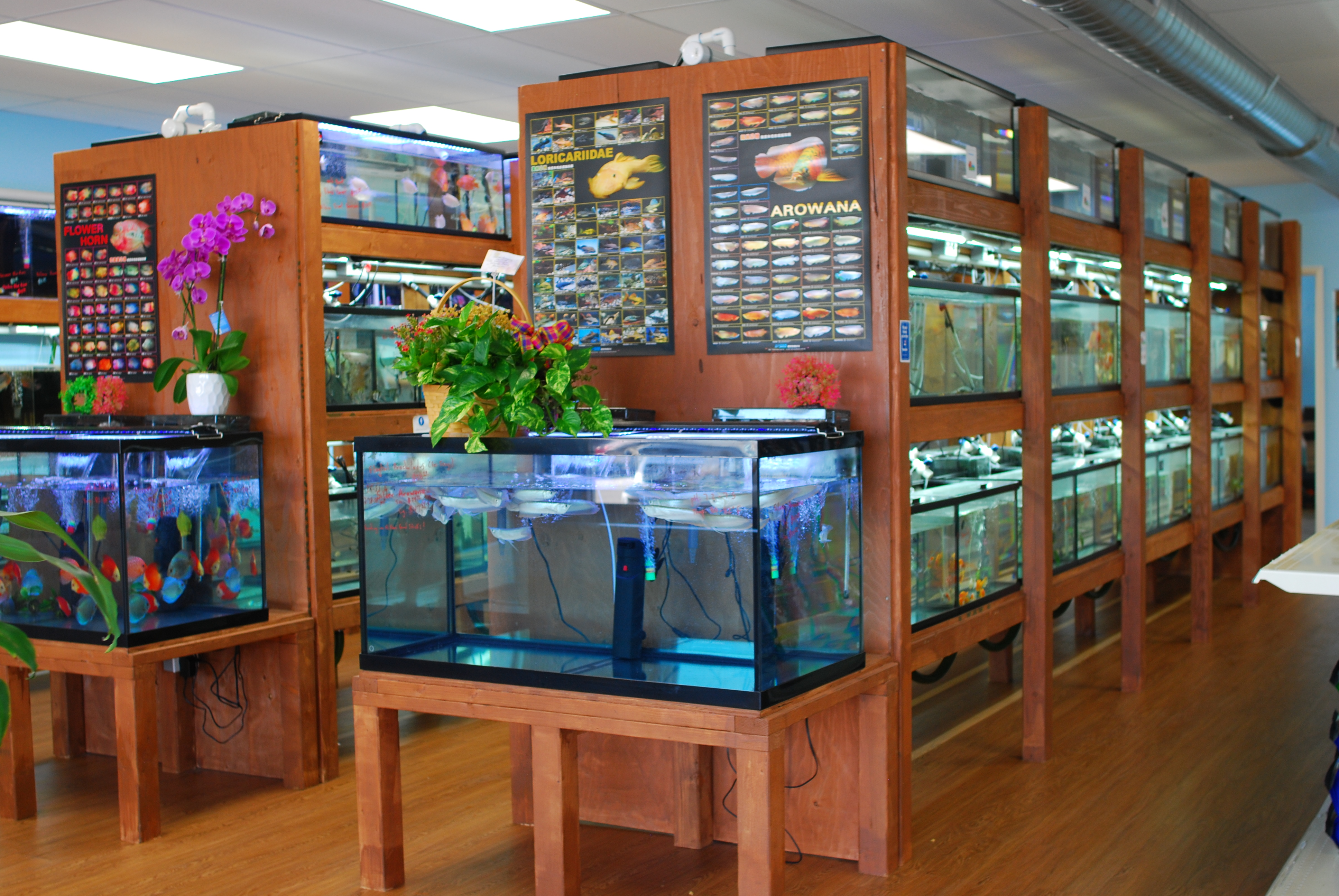 Official grand opening for pet zone tropical fish in for Pet fish store