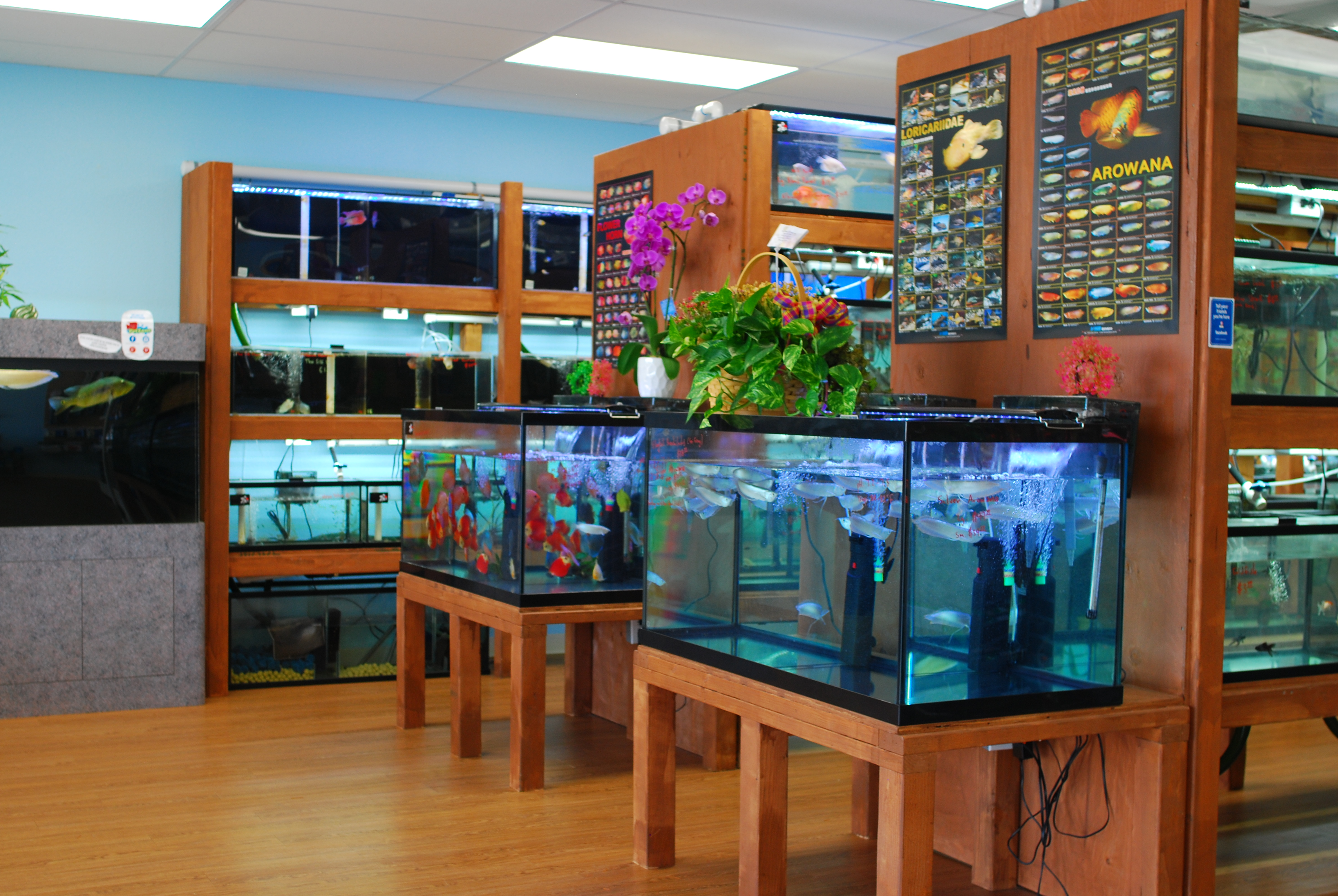 Official grand opening for pet zone tropical fish in for Local fish stores